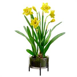 These new daffodils bring cheer to your home all year round. Item #LFD325
