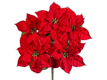 Full with 5 blooms, the quintessential Christmas flower adds holiday spirit to any arrangement. Item #XPZ905