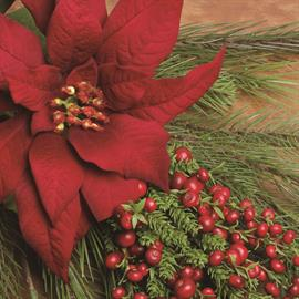 Botanically correct poinsettias, berries and pine merge for a fresh take on Christmas