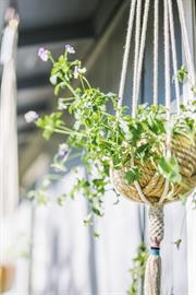 Decorate your home with this symbol of dignity and strength! Hand knotted from cotton rope, this plant hanger is super-versatile and will hold most small potted plants. This handmade piece looks great in your living room or office, or even a covered patio or terrace.